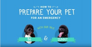 How to Prepare Your Pet for an Emergency