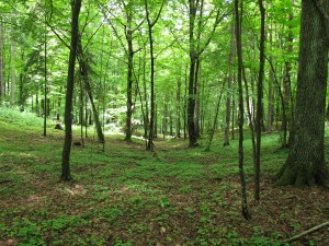 Natural settings provide their own mulch with leaves and groundcovers