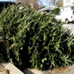 Christmas tree on curb for recycling pickup.