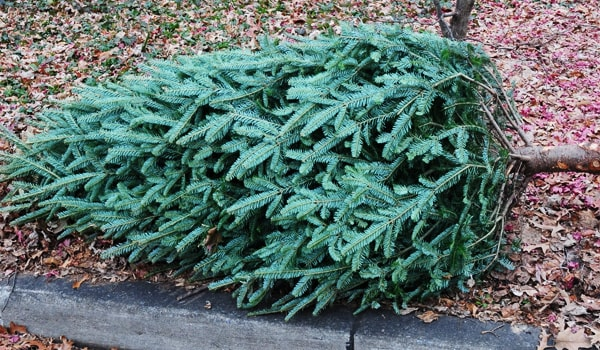 christmas_tree_street_curb_collection