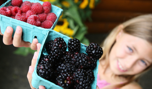 arlington_farmers_market_girl_holding_raspberries_blackberries