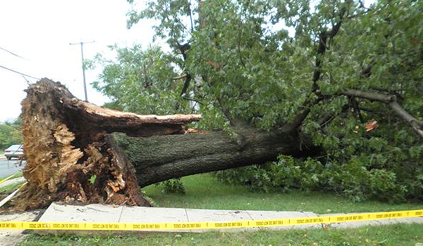 downed_tree_arlington_county_virginia