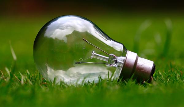 light_bulb_in_grass