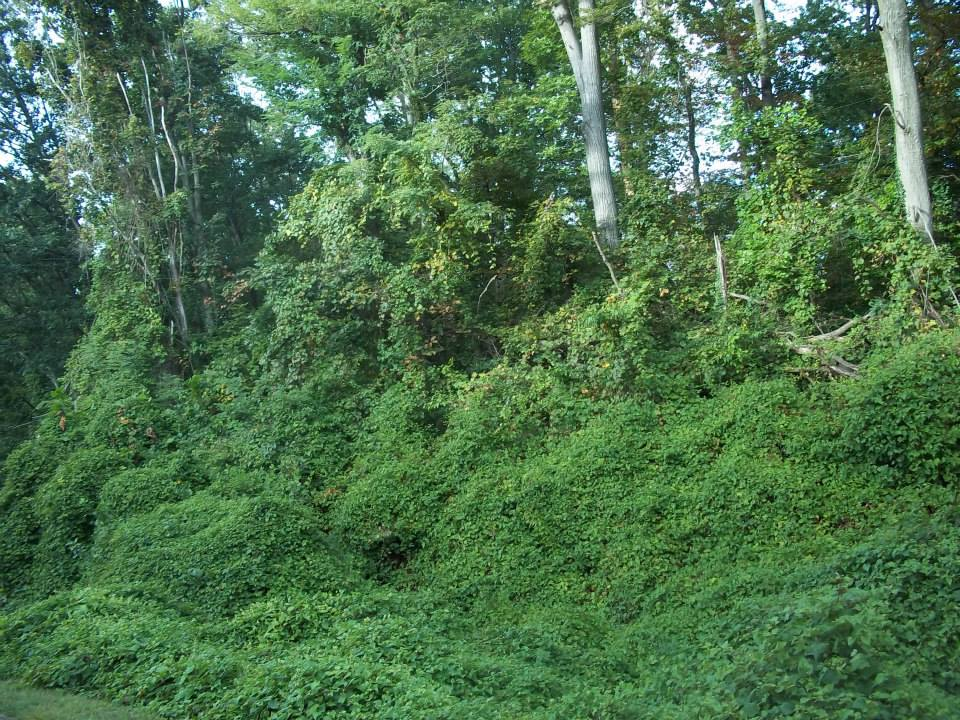 invasive plants Invasive plants have been brought into areas, and this can happen accidentally or on purpose they are often referred to as exotic, alien, introduced, or non-native species.