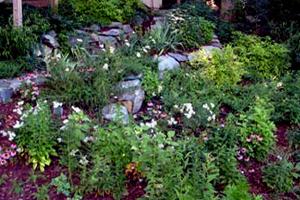 Native plants in a conservation landscape.