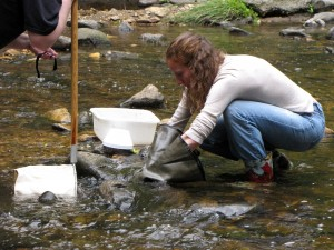 Stream monitors wade into Arlington's streams with nets to sample macroinvertebrates.