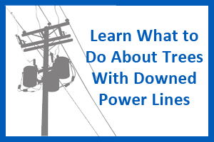 what to do about rees with downed power lines