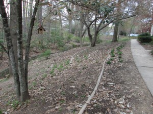 """After"" image of slope that was terraced with staked tree limbs and planted with natives through the StormwaterWise Landscapes Program."
