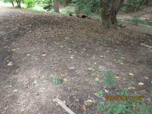 """Before"" image of slope that was terraced with staked tree limbs and planted with natives through the StormwaterWise Landscapes Program."