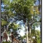 Black oak - 1318 N Harrison St