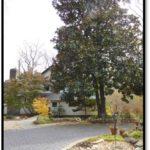 Southern Magnolia - 3440 Roberts Ln
