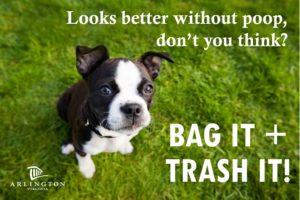 Dog sits on lawn, asks 'looks better without poop, don't you think' tagline Bag It + Trash It