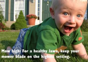Mow high: For a healthy lawn, keep your mower on the highest setting