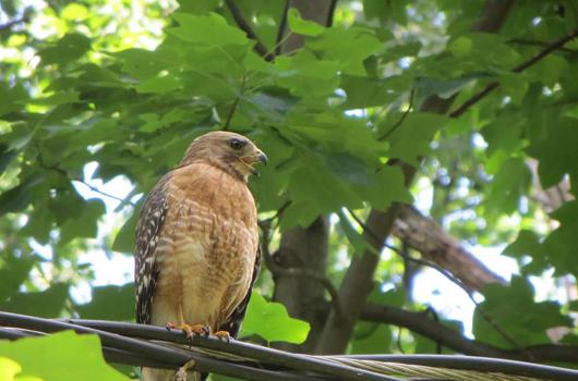 bird at long branch