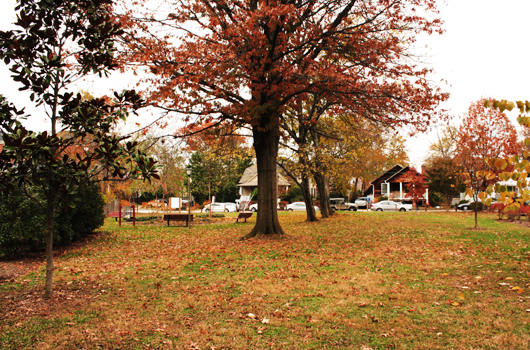 herselle_miliken_park_arlington_county_trees