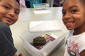 kids playing with a turtle