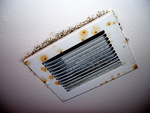 Information About Mold Health