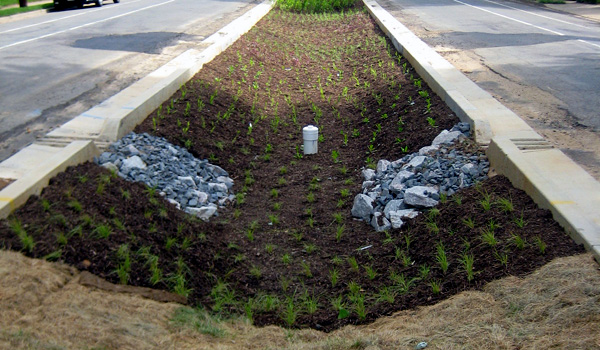 New native plants in the Patrick Henry green street.