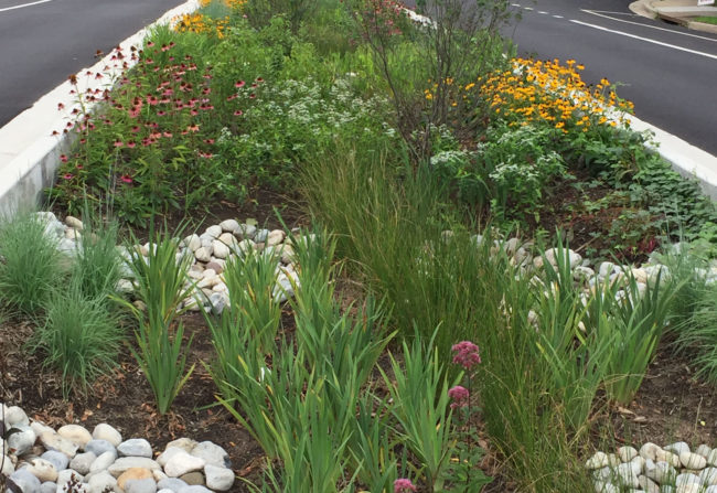 Green street rain garden on Williamsburg Boulevard