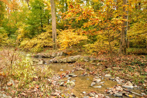 Stream restoration on Donaldson Run