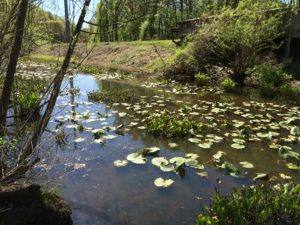 Sparrow Pond with aquatic plants