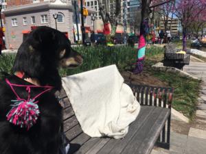 dog sitting on park bench