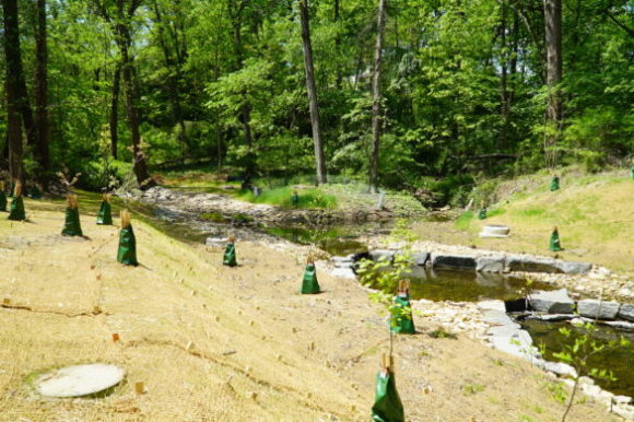new trees planted along stream