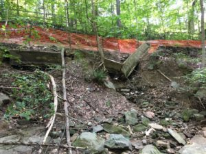 trail collapsed in woods