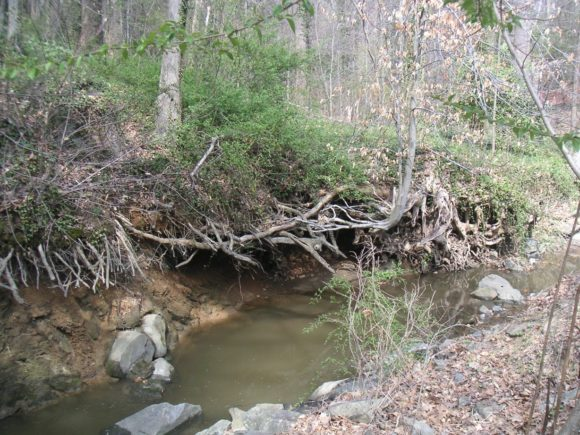 stream erosion under tree