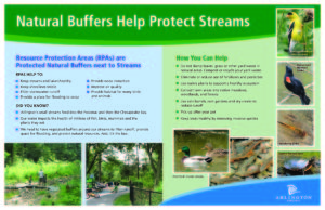 Natural buffers help protect streams