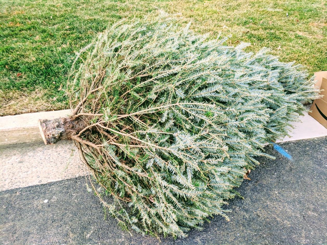 Christmas Tree Pick Up.Christmas Tree Collection Trash Recycling